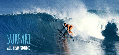 Surf tours with experienced guides